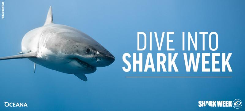 Tiger Shark Big Island Now Photo