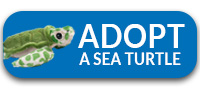 Kemp S Ridley Turtle Oceana